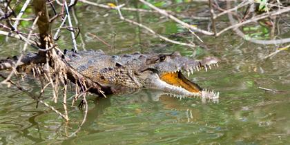 best wildlife cruise montego bay jamaica