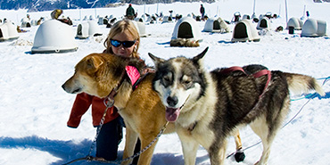 Husky sled dogs with a child