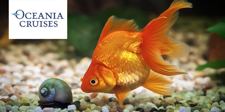 oceania cruises goldfish