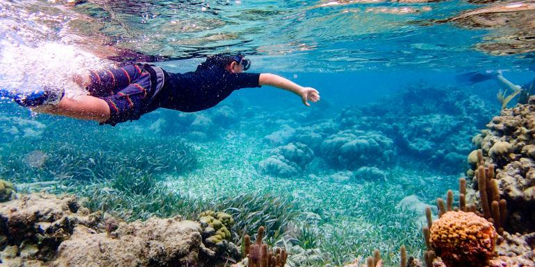belize city caribbean snorkeling reef fish