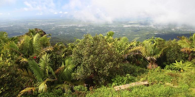el yunque rainforest puerto rico