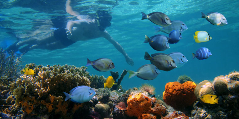snorkel cruise excursion