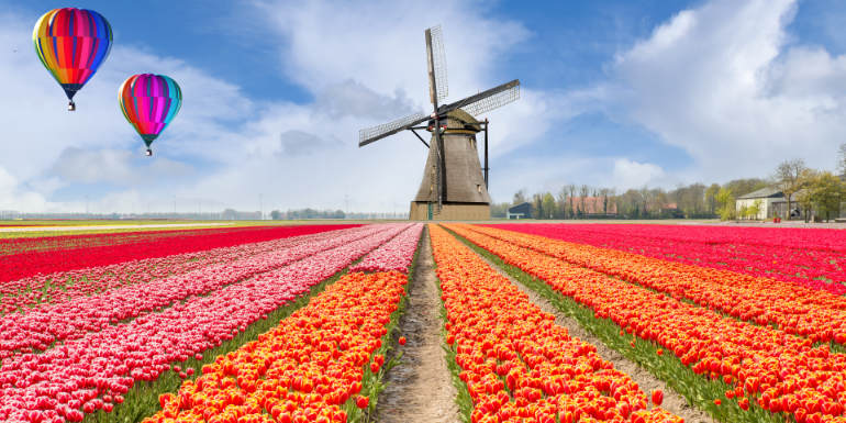 netherlands tulips river cruise holland windmill