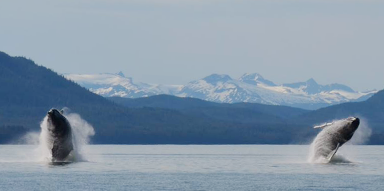 Alaska cruise tours juneau whale watch